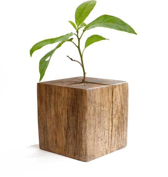 eco-design wsc